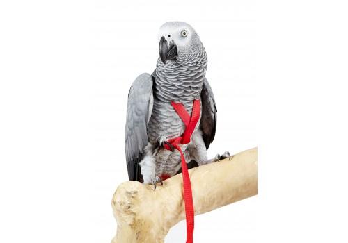 Papegaaien speelgoed Aktie  AVIATOR tuigje XL